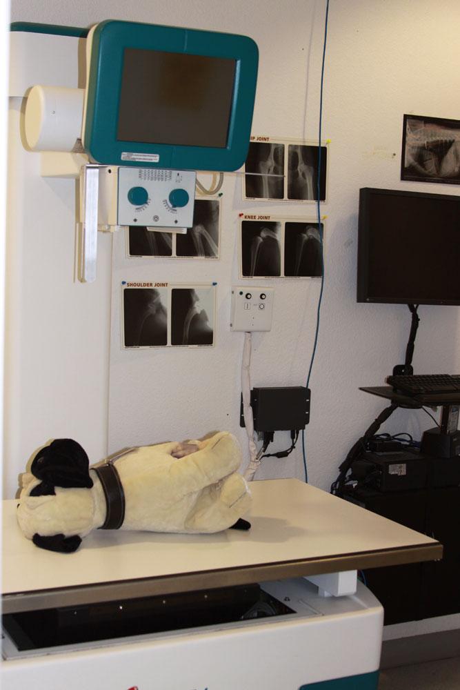 Radiology-(Xray)